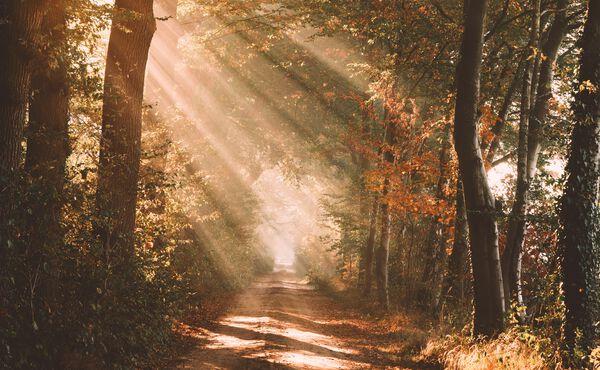 Lumière sur la luminothérapie, un remède contre les jours sombres