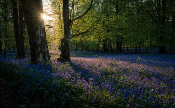 Meditação banho na floresta: aproveite o poder benéfico da natureza