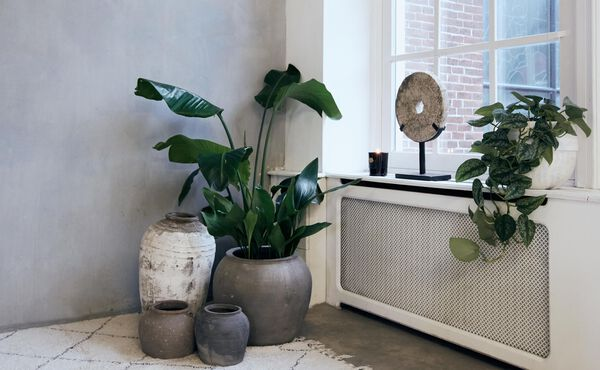 The Power of Plants to Detoxify Your Home
