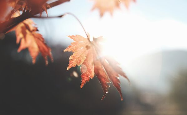 Autumn is here: how to stay balanced during a seasonal change