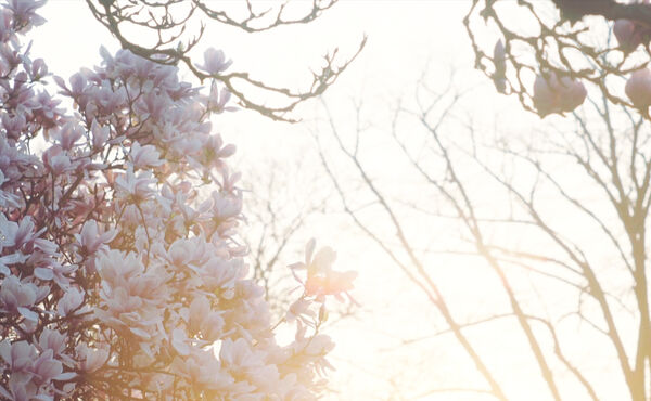 Harness the joy of spring with this blossom-inspired meditation