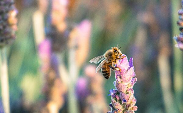 Como dominar a arte da apicultura, uma forma consciente de ajudar o planeta